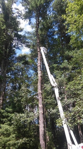 Tree Removal Wayland MA